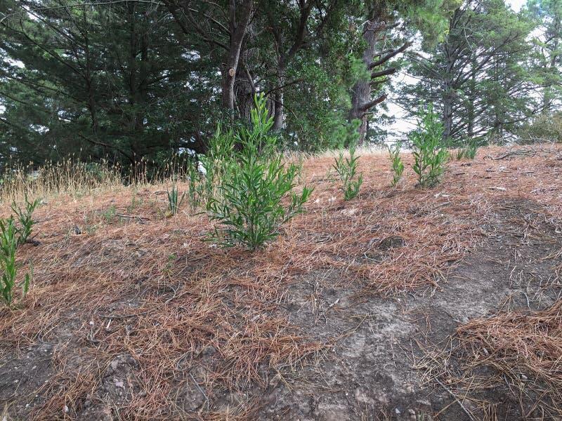 Junge Bäume, die auf einer Flussbank wachsen stockfotografie