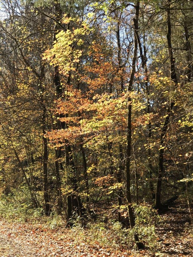 Junge Bäume im Fall lizenzfreie stockbilder