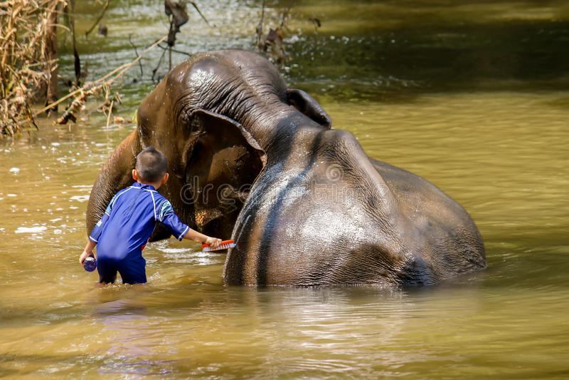 Junge badet einen Elefanten im Fluss lizenzfreies stockbild