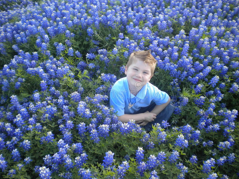 Junge in den Bluebonnets lizenzfreies stockbild