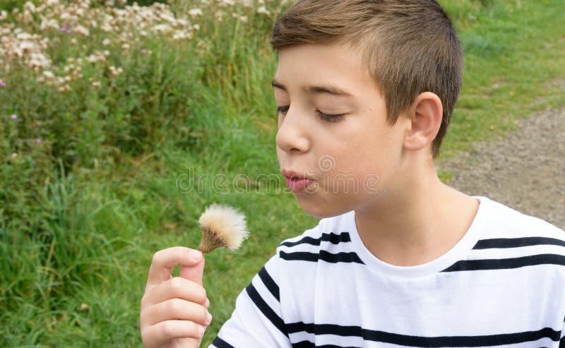 Junge, der auf einem Groundsel-Blumengänseblümchen durchbrennt lizenzfreie stockfotos