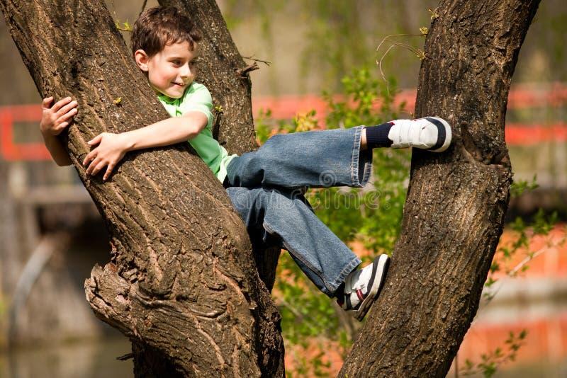Junge, der in den Bäumen steigt lizenzfreies stockbild