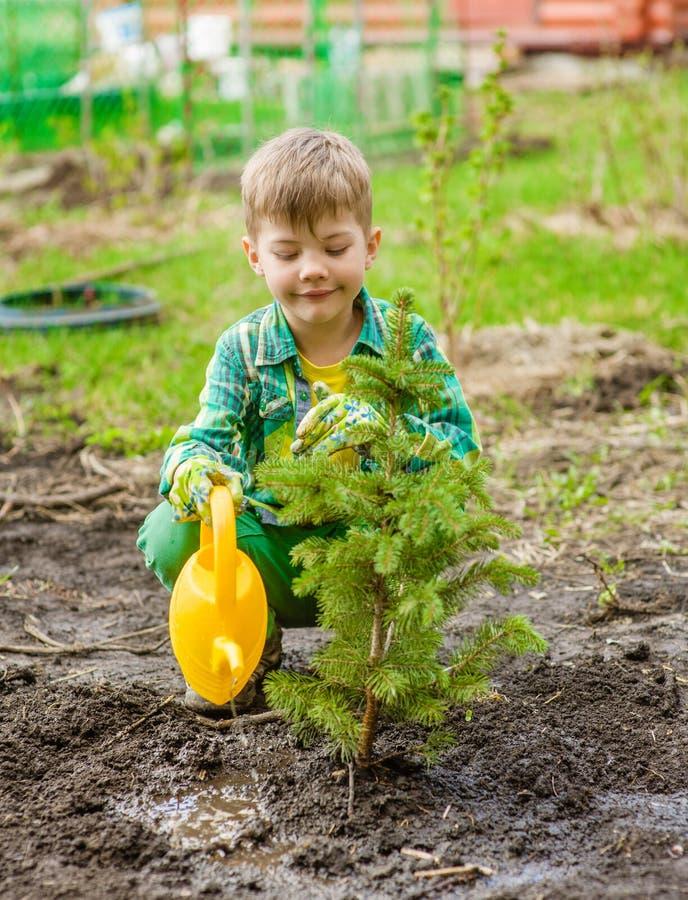 Junge, der den gepflanzten Baum wässert stockfoto
