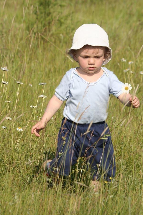Junge, der ein Gänseblümchen auswählt stockfotos