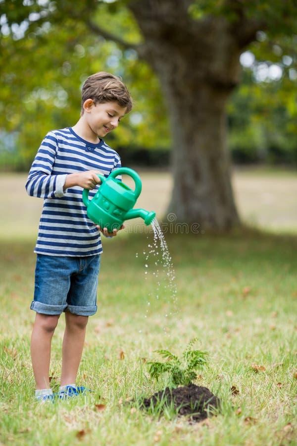 Junge, der eine Jungpflanze wässert stockbild