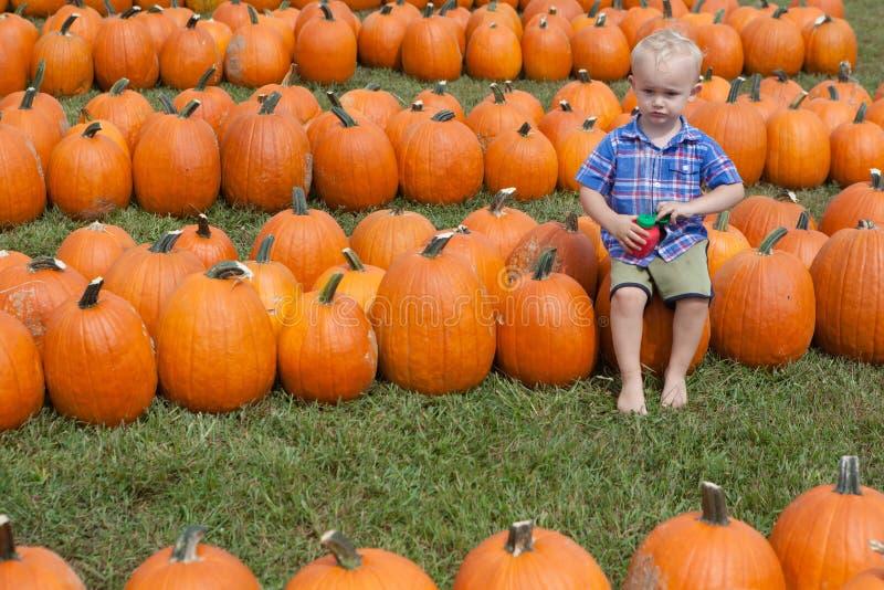 Junge, der in einem Kürbis-Flecken sitzt lizenzfreie stockfotografie
