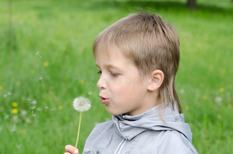 Junge, der in Feld-Schlaglöwenzahn steht lizenzfreies stockbild