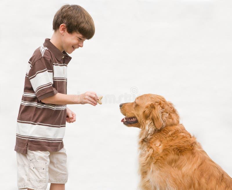 Junge, der Hund eine Belohnung gibt stockfotografie