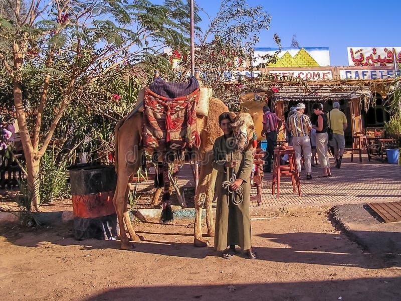 Junge, der Kamele zum Touristen mietet stockfotos