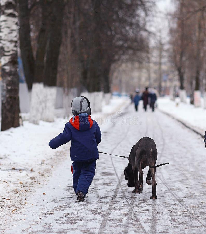Junge, der mit einem großen Hund im Winterpark geht stockfotografie