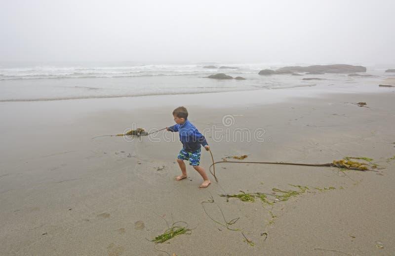 Junge, der mit Kelp auf dem Strand im Nebel spielt stockbild