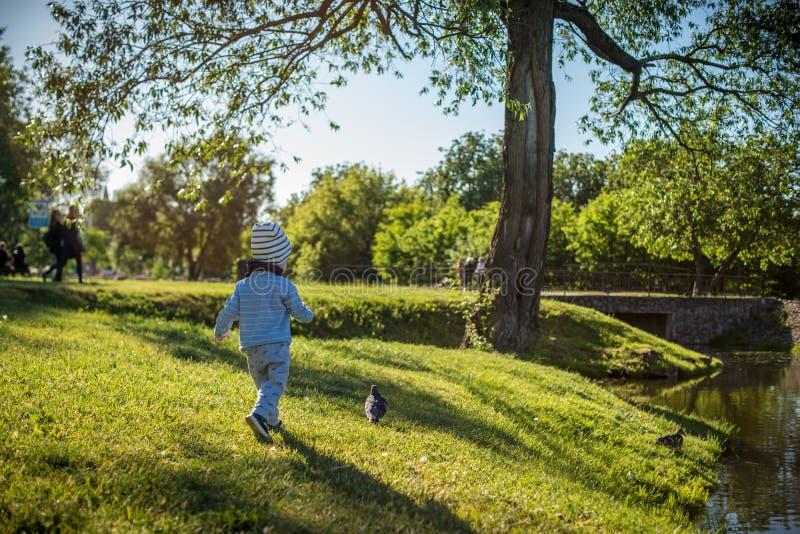Junge, der versucht, Vogel im Park zu fangen lizenzfreies stockfoto