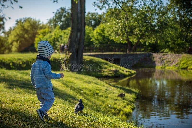 Junge, der versucht, Vogel im Park zu fangen stockbild