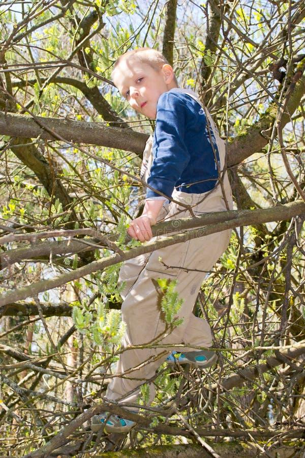 Junge in einem Baum stockfoto