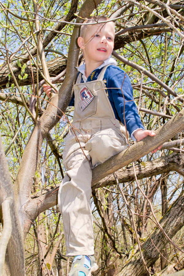 Junge in einem Baum stockbild