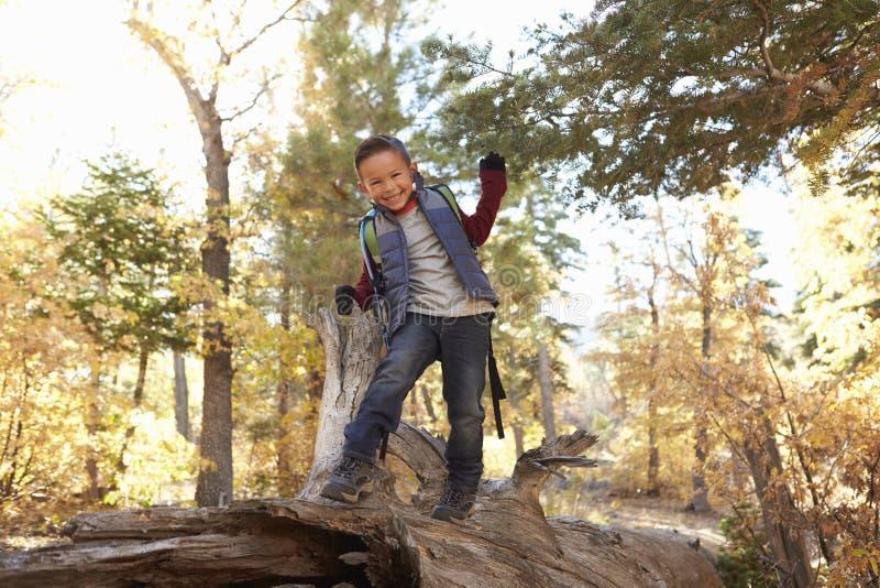 Junge in einem Wald schaut zur Kamera und geht entlang gefallenen Baum stockbilder