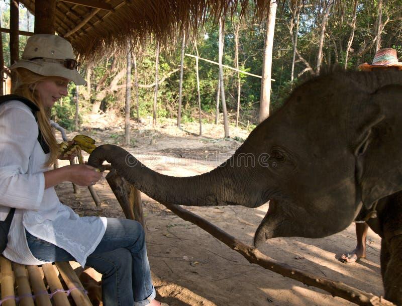 Junge europäische Frauen, die Elefantkalb speisen stockfotos