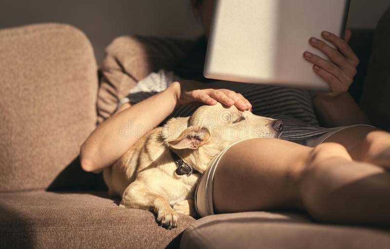 Junge Frau in der gemütlichen Hauptabnutzung, die auf Sofa mit einem Schlafenhund auf ihrem Schoss, Tablette und das Ablesen halt stockfoto