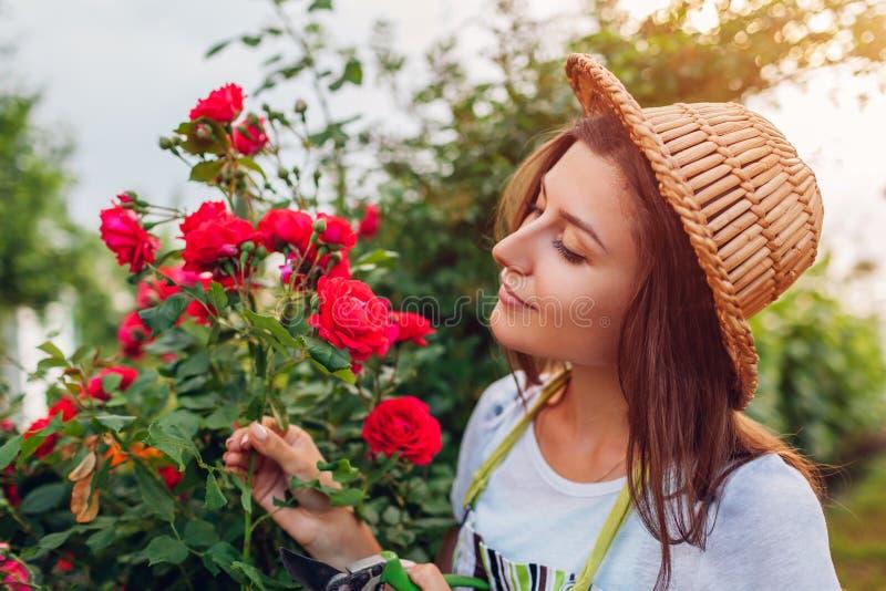 Junge Frau, die Blumen im Garten erfasst Mädchen, das Rosen riecht und abschneidet Im Garten arbeitenkonzept lizenzfreie stockfotos