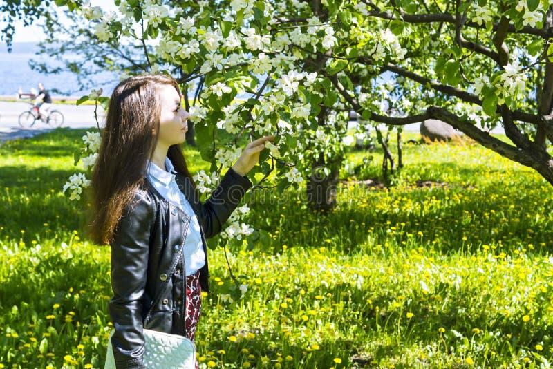 Junge Frau, die den Duft des Applebaums genießt stockbild