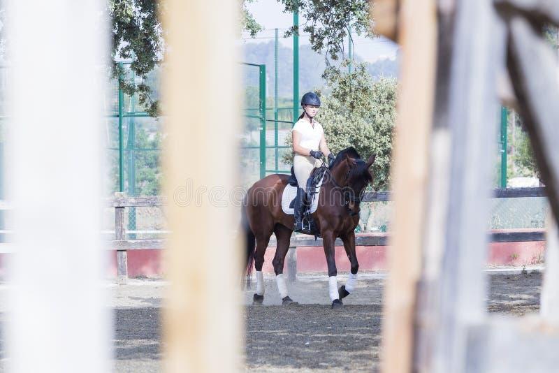 Junge Frau, die ein Pferd reitet stockfotografie