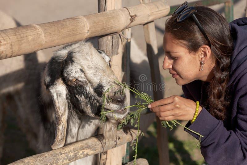 Junge Frau, die eine Ziege im Safari-Park einzieht stockfotos