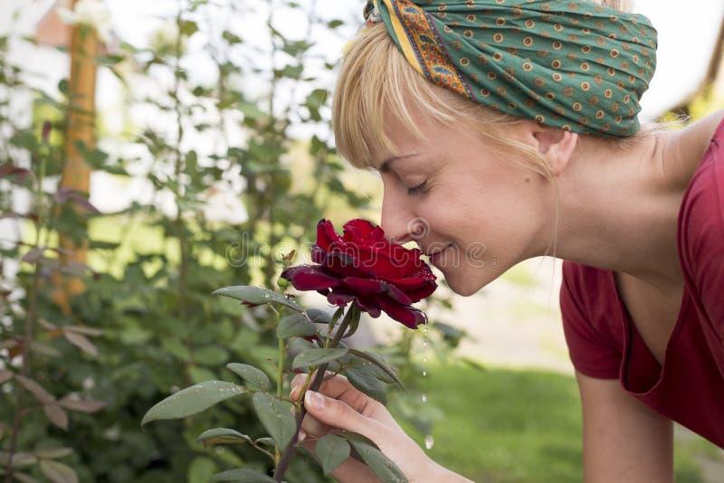Junge Frau, die frische rote Rose mit Tau riecht stockfotos
