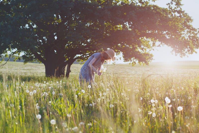 Junge Frau, die gelben Strohhut und lange Leinendas kleid genießt die Natur, frischen schönen Löwenzahn auswählend, heißer Sommer lizenzfreie stockfotos