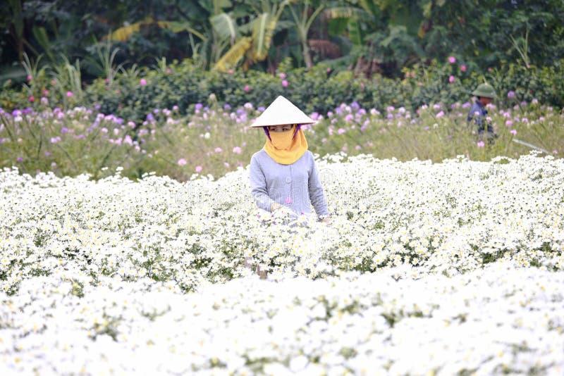 Junge Frau, die in ihrem Garten in Hanoi, Vietnam am 2. Dezember 2016 arbeitet stockbilder