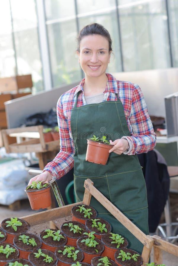 Junge Frau, die im Gewächshausgartenbau arbeitet stockbilder
