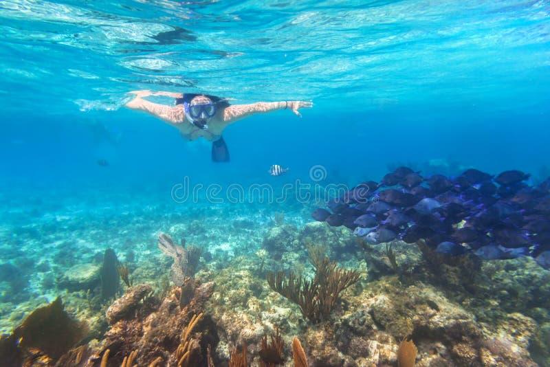 Junge Frau, die im tropischen Wasser schnorchelt stockfoto