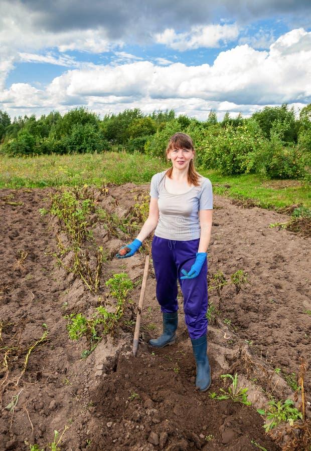 Junge Frau, die Kartoffel auf dem Feld erntet stockbild