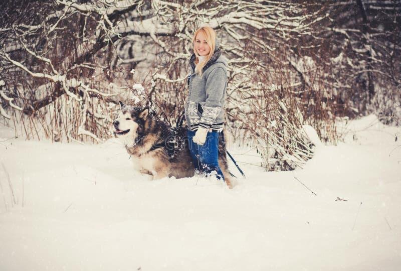 Junge Frau, die mit einem Schlittenhund geht lizenzfreie stockbilder