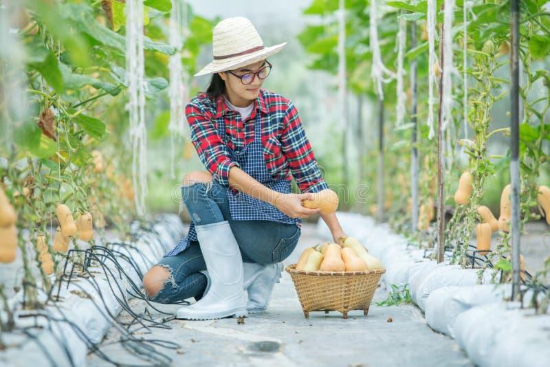 Junge Frau in einem Gewächshaus mit Moschuskürbis lizenzfreies stockfoto