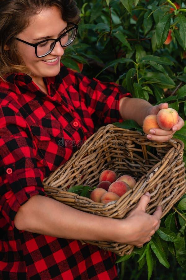 Junge Frau heben Pfirsiche im Garten von Pfirsichbäumen auf lizenzfreie stockbilder