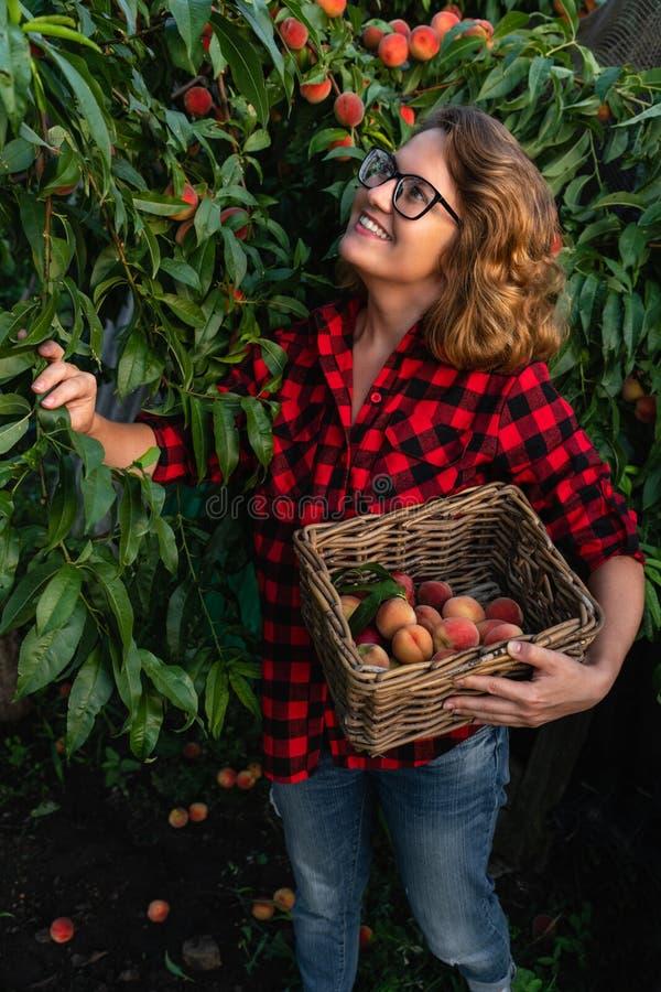 Junge Frau heben Pfirsiche im Garten von Pfirsichbäumen auf stockfotografie