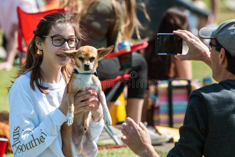 Junge Frau hebt Chihuahua an, um Smartphone-Foto zu machen stockbilder