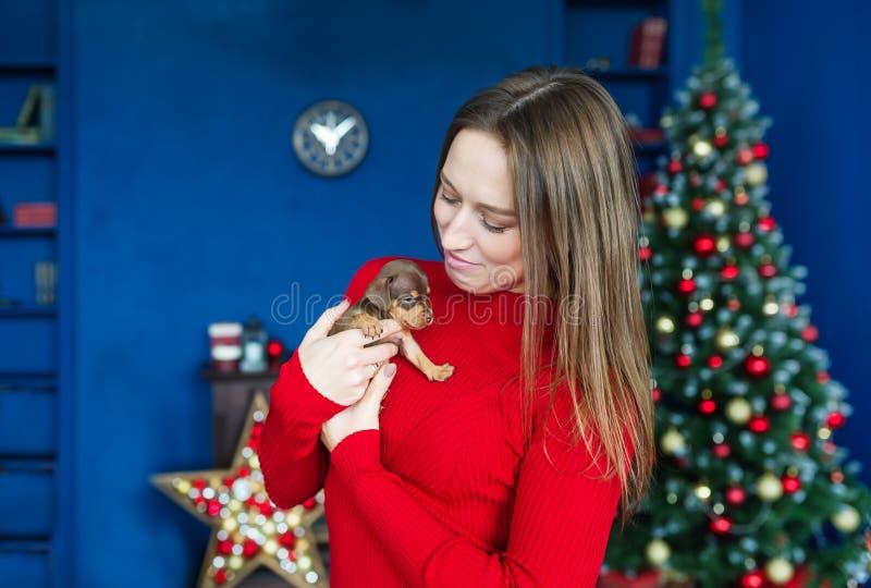 Junge Frau im roten Kleid, das nahe kleinen Hund am Weihnachtsbaum hält stockfoto