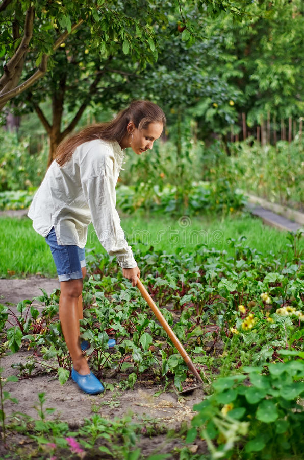 Junge Frau mit der Hacke, die im Gartenbett arbeitet stockfotos