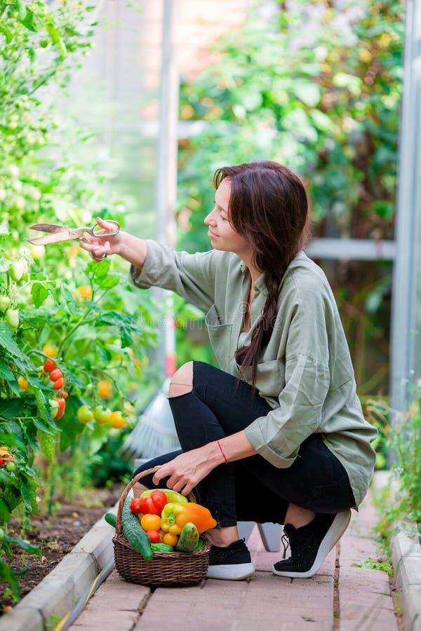 Junge Frau mit Korb des Grüns und des Gemüses im Gewächshaus Zeit zu ernten lizenzfreie stockfotos