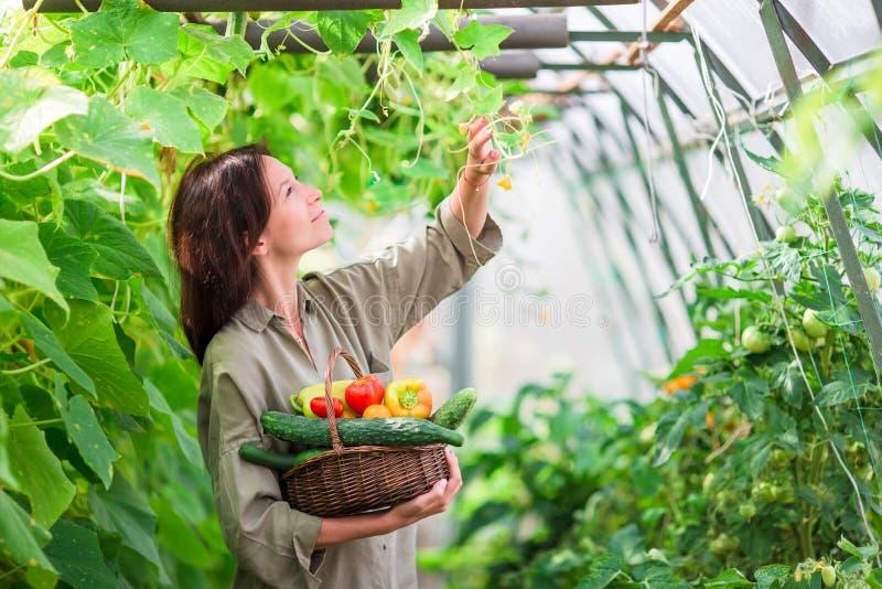 Junge Frau mit Korb des Grüns und des Gemüses im Gewächshaus Zeit zu ernten stockfoto