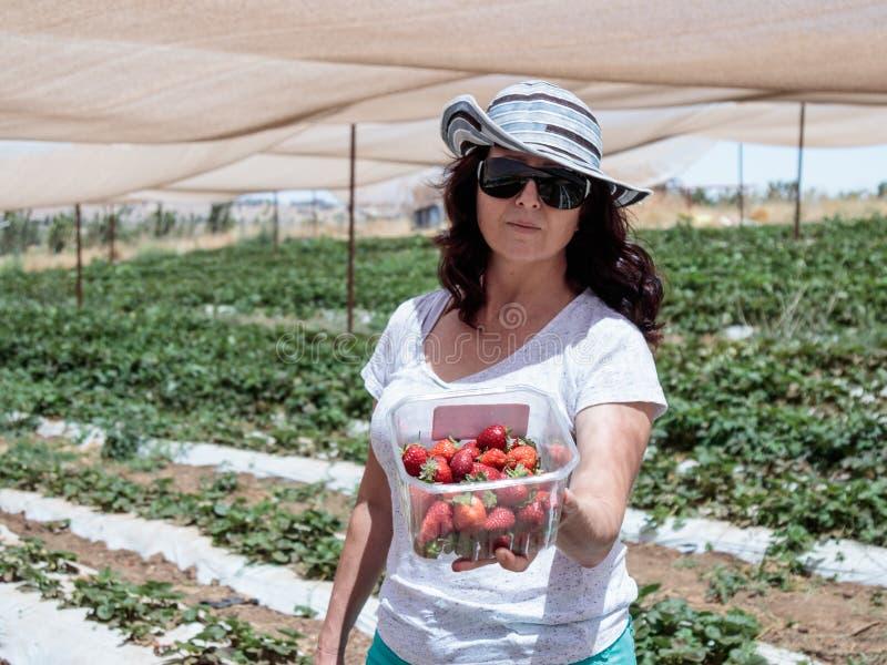 Junge Frau steht auf einem Hintergrund von grünen Betten und zeigt einen Kasten mit kürzlich geernteten roten reifen Erdbeeren stockbild