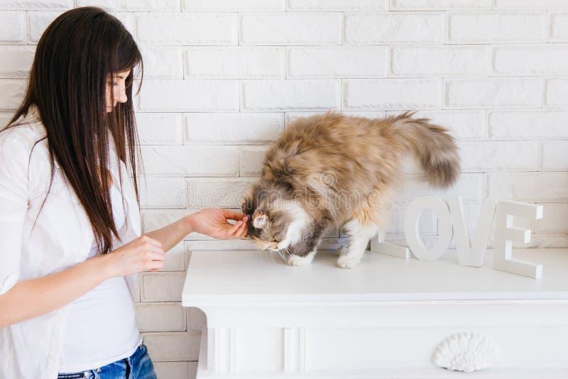 Junge Frau streichelt ihre reizende flaumige Katze lizenzfreie stockbilder