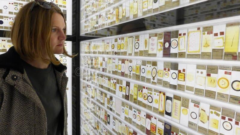 Junge Frau, welche die Anzeige von Insekten und von Mikroleben auf dem Neonzuschauer in Grant Museum von Zoologie schaut London stockfotografie