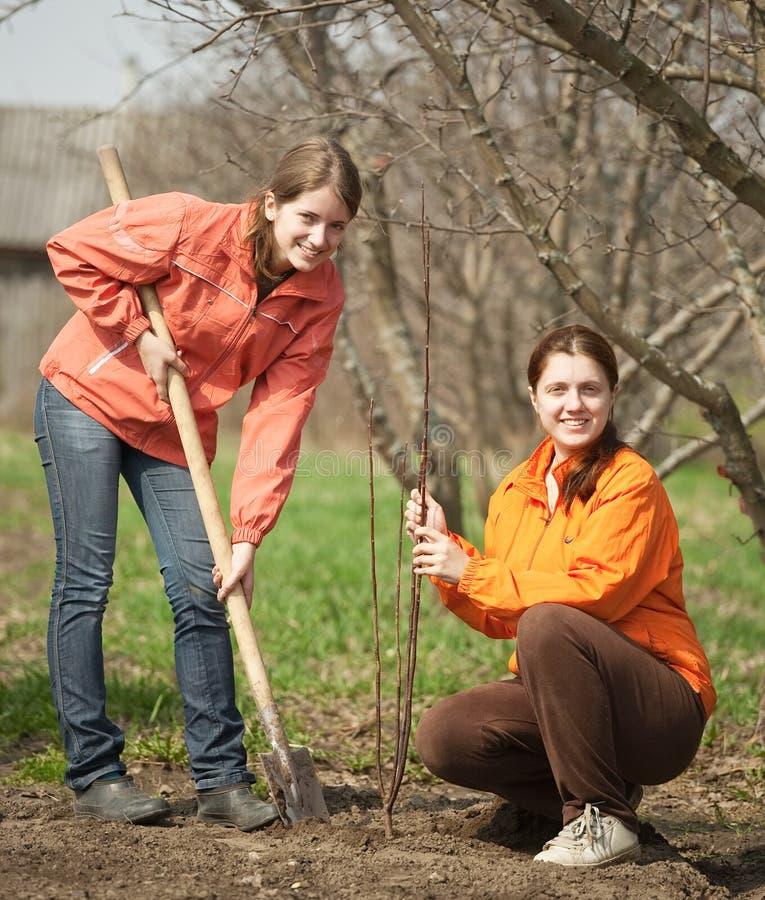 Junge Frauen, die Obstgarten bilden lizenzfreie stockfotografie