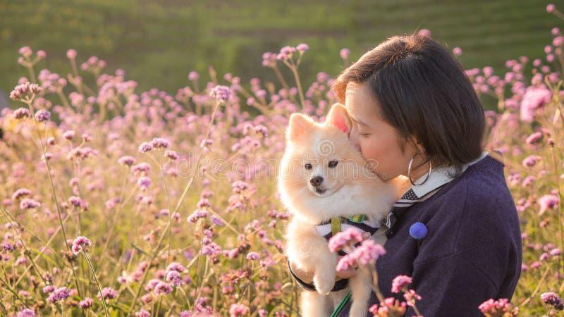 Junge Frauen umarmten und küssen ihren lieblichen pomeranischen Hund auf rosafarbenen Blumenfeldern bei Sonnenuntergang und kopie lizenzfreie stockfotos