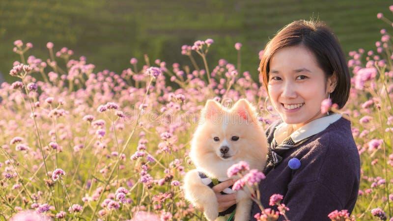 Junge Frauen umarmten und küssen ihren lieblichen pomeranischen Hund auf rosafarbenen Blumenfeldern bei Sonnenuntergang und kopie lizenzfreies stockfoto