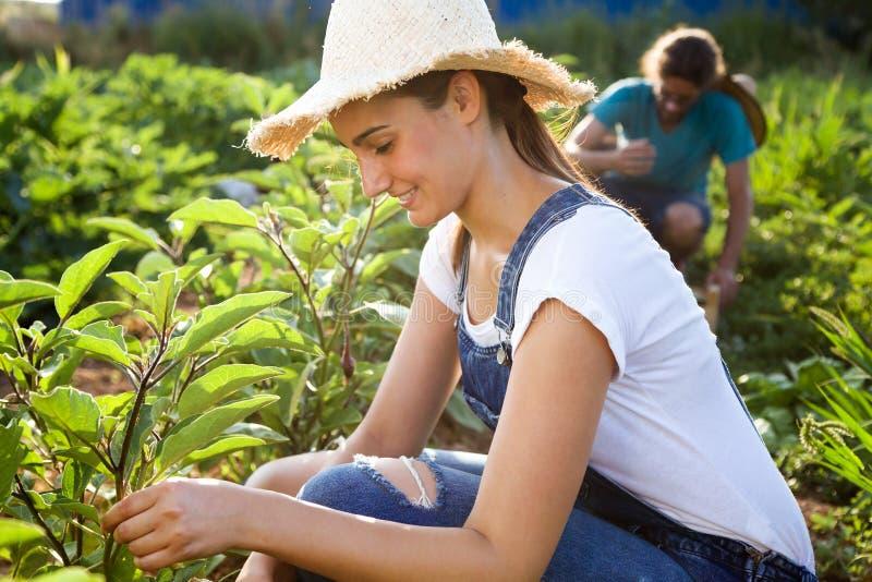 Junge Gartenkünstlerpaare, die Frischgemüse im Garten ernten lizenzfreie stockfotografie