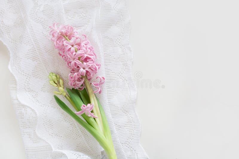 Junge Gelbe Blume Gegen Weißen Hintergrund Rosa Hyazinthe Auf Weißen ...