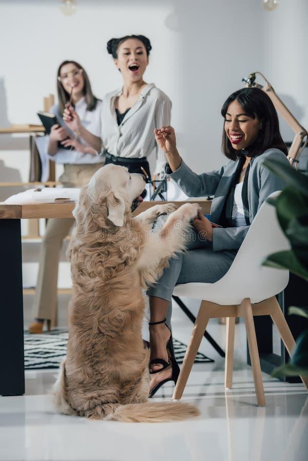 Junge Geschäftsfrauen, die mit Hund beim Arbeiten im Büro spielen stockfotografie